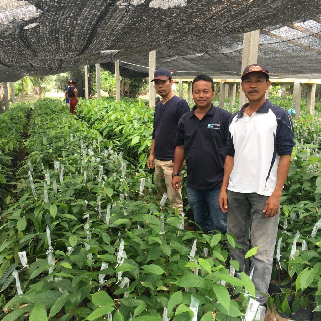 Identifikasi oleh Tim Dinas Perkebunan Sumatera Selatan